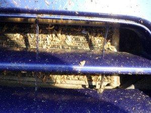 Фото - здесь нет сетки для радиатора автомобиля, s.drom.ru
