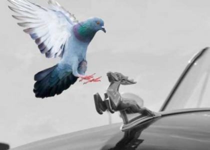 Голубь летит на фигурку у машины
